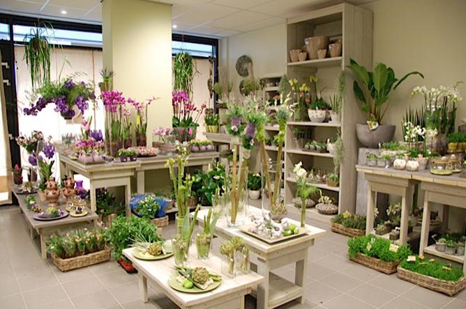 Interieurontwerp en kleuradvies bloemisterij in Nijmegen.